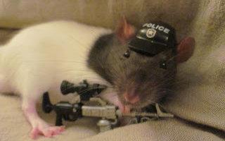 Крысы в погонах