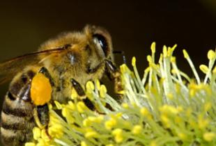Фермеров привлекли к ответственности за гибель пчел