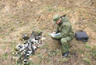 На окраине Пугачева найдены костные останки человека