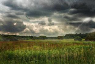 В регионе ожидается дождь и сильный ветер