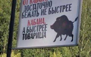 В Пугачевском районе искали убежавшую от кабанов собирательницу грибов