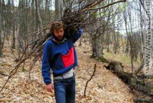 Россиянам позволят собирать дрова без специального разрешения