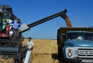 В области резко снизилась урожайность зерновых