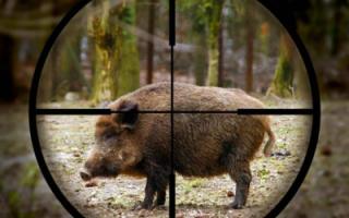 В области будет действовать новый порядок на добычу охотничьих ресурсов