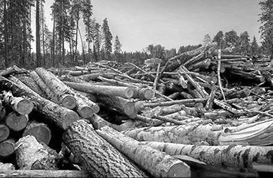 истребление леса