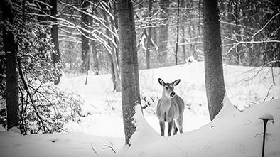 deer-hunting-in-the-snow
